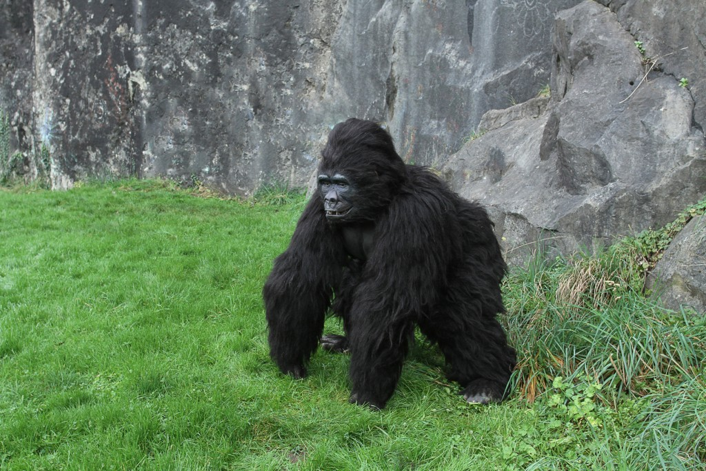 gorilla suit for hire. & Animatronic Gorilla u2013 Valerian Entertainment u2013 Stilt Walkers ...
